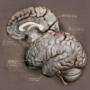 Logo do grupo Cérebro Social