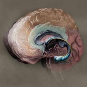 Logo do grupo Cérebro Emocional