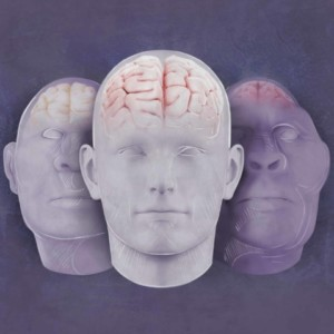 Logo do grupo Evolução do Cérebro